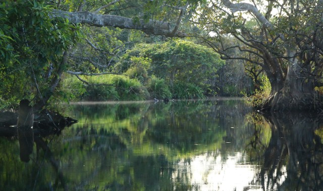 Protect the World's Most Sacred Mangrove Forests