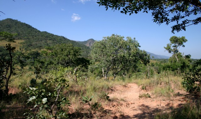Plant Trees in the Miombo Woodlands