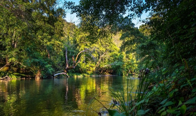 Plant Trees in the Atlantic Forest