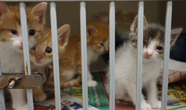 End Cat Overpopulation in Shelters