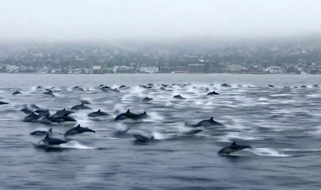 Fund Marine Research and Dolphin Conservation Efforts